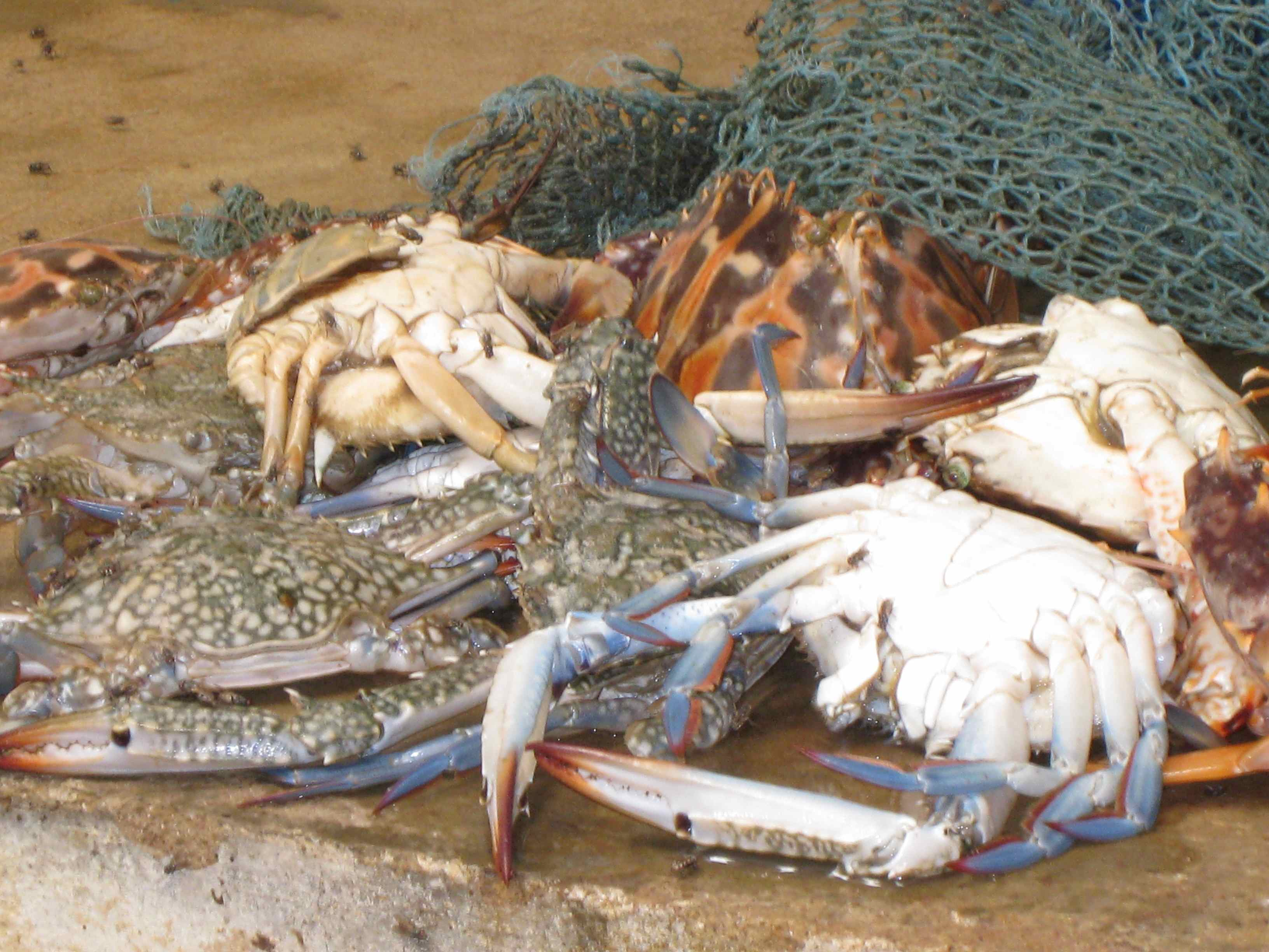 crabs-in-sadder-market-blog.jpg
