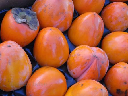hachiya persimmons copy