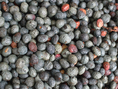 menengiç berries