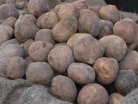 desert truffles-5 copy