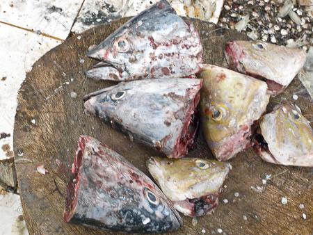 fish-heads-into-creme-de-la-mer-copy