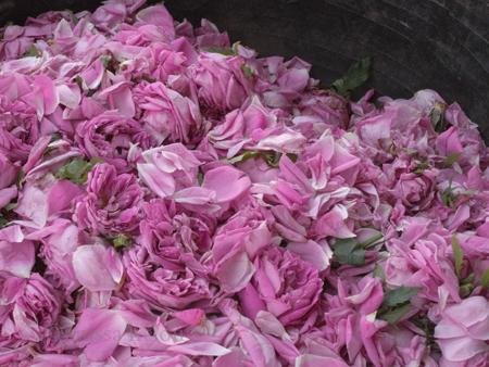 rose petals for sale 1 copy