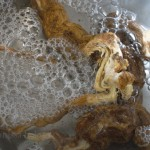 c-natef-soapwort boiling copy