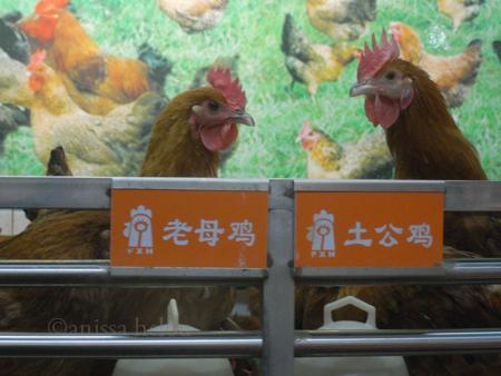 shanghai-best friends copy