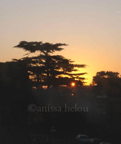 bournemouth-cedar & rising sun copy copy