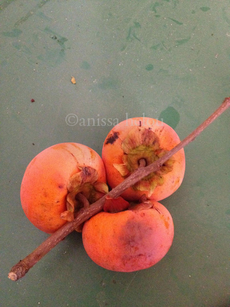persimmons on a branch copy