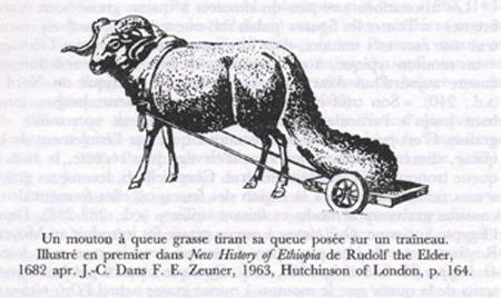 a-le mouton et le murier