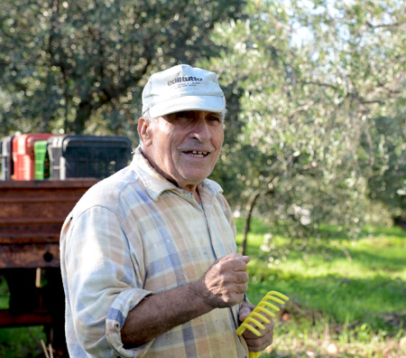 sicily-olive picker with his rake copy