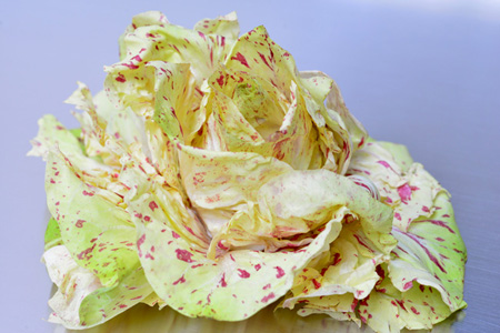 beautiful lettuce 2 copy