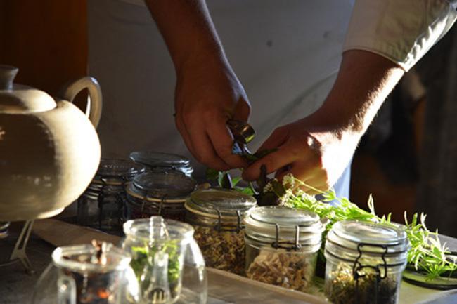 faviken-magnus picking herbs for tisane copy
