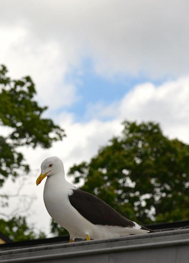 stockholm-rosendals bird copy