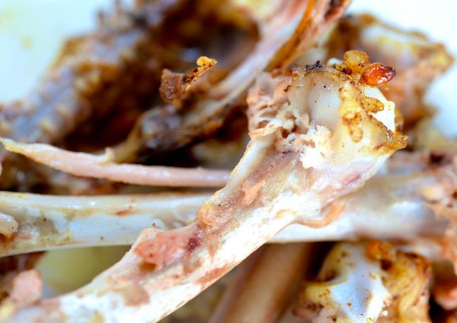 food debris copy