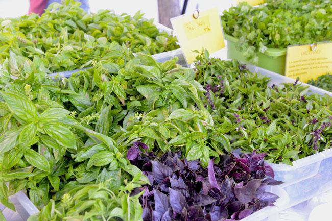 union sq farmers market - basil copy