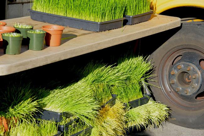 union sq farmers market - grass copy