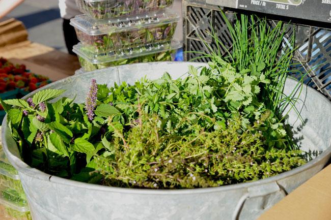 union sq farmers market - herbs copy