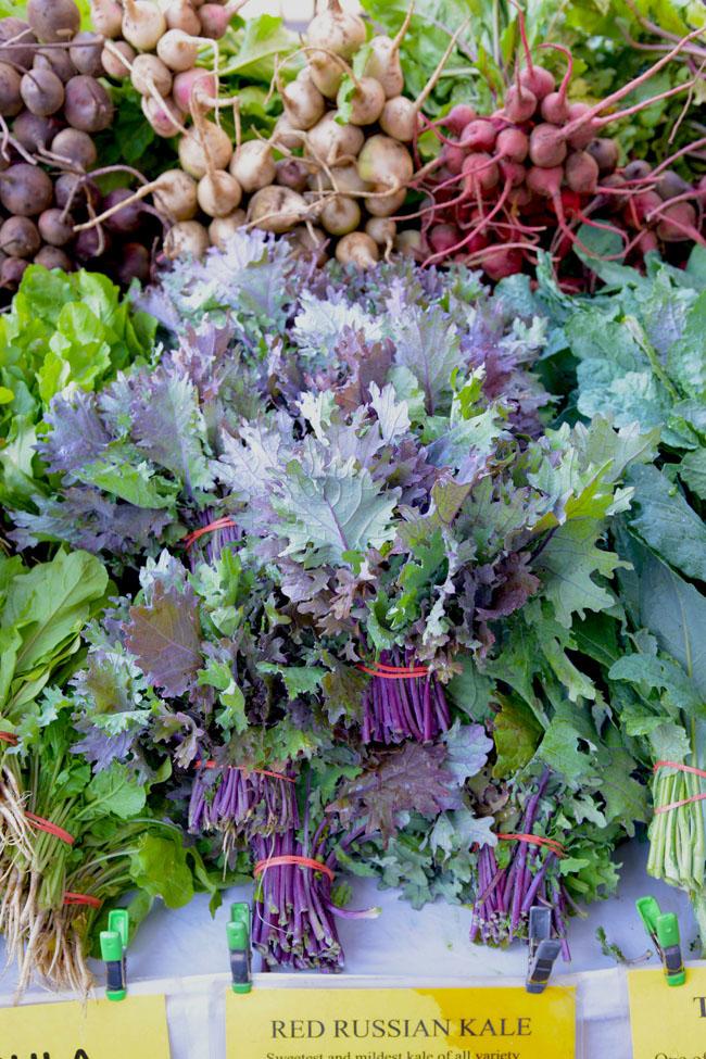 union sq farmers market - red russian kale copy