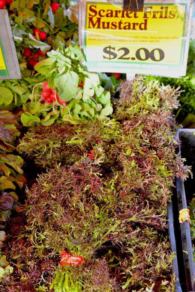 union sq farmers market - scarlet frills mustard copy