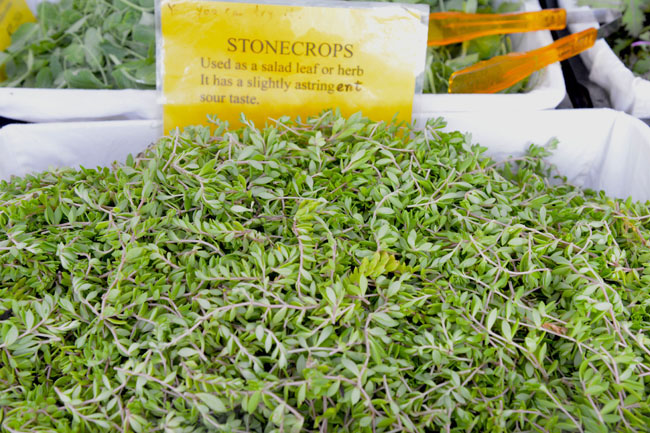 union sq farmers market - stone crops copy