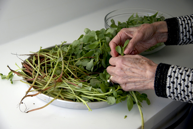 b-emile bakery-purslane fatayer-mother picking 10 copy