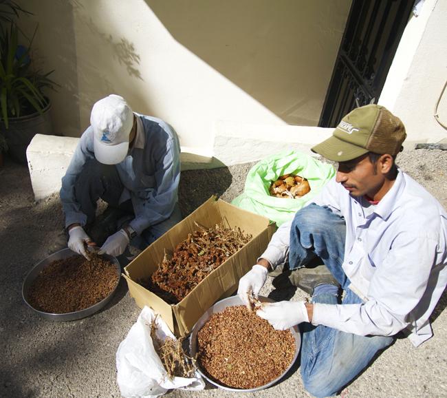 sumac-two guys picking copy
