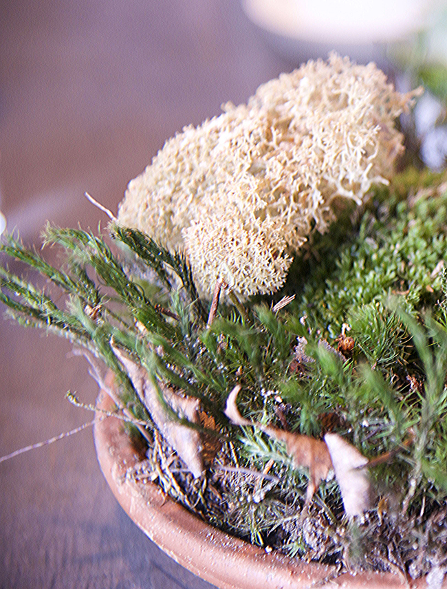 2-moss & cepes 2 copy