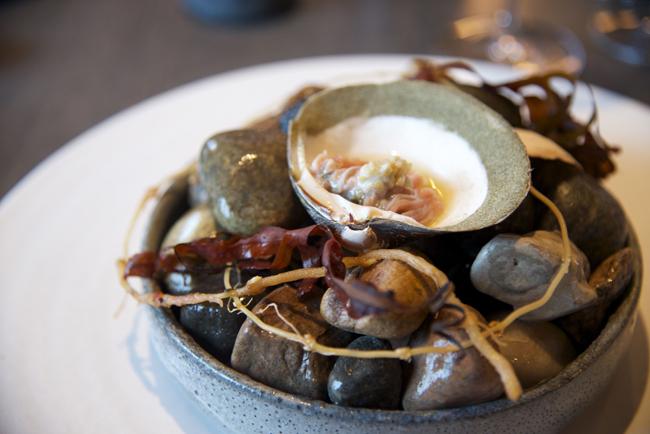 96-mahogany clam copy