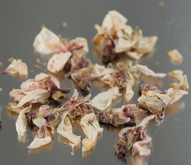almond blossom 3 copy copy