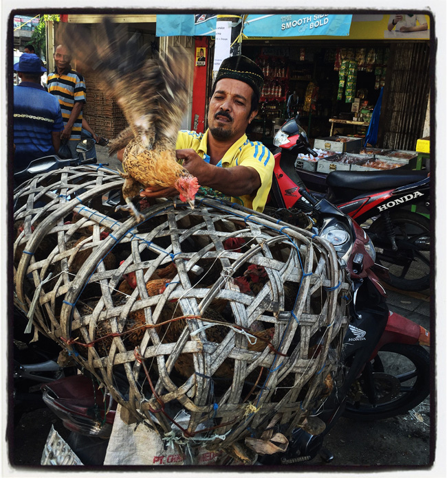 chicken cage-medan copy