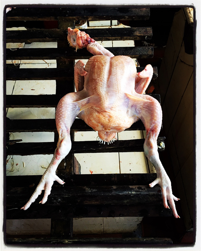 chicken display-banda aceh copy